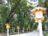 夏の宮崎神宮での写真WS・2!