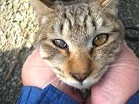 ネコ好きの写真WS・3!