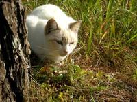 ネコ好きの写真WS!