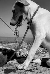 犬は無実です!