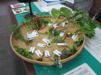 植樹祭&山菜教室