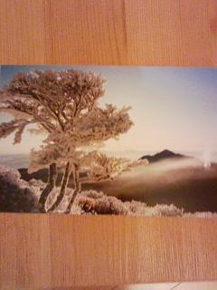 ポストカード 出来ました。