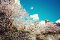桜と人と暮らふと(^o^)/