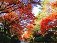 紅葉と素敵なカフェ