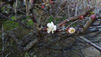 『もうすぐ春ですね~?』