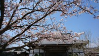 『百箇日と春の西都原♪』