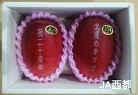 『宮崎県産完熟マンゴー「太陽のタマゴ」初競り2018』