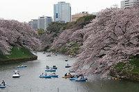 桜満開 2017/04/07 17:00:00