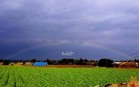 虹の架け橋♪