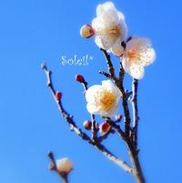 梅の花_市民の森♪