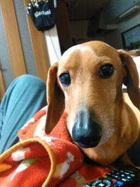 愛犬のくうが今月誕生日