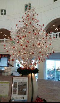 西米良のほおずきツリー ㏌青島