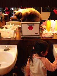 猫と子供ちゃん