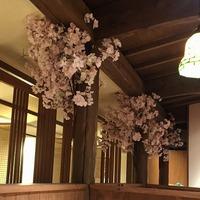 居酒屋の桜