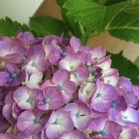 紫陽花 2017/06/22 00:03:00
