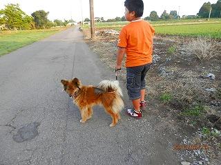 ❤我が家の「ひまわりと子犬の7日間」❤