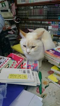 宮崎猫PR隊②