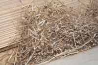 「脱穀の日④」 2014/11/08 08:39:30