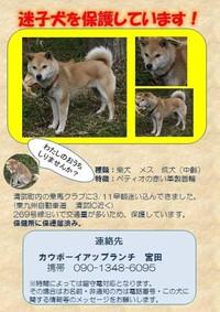 清武町・迷子犬が保護されています