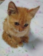 保護ニャンコ 保護猫 宮崎市