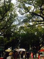 楠木並木朝市