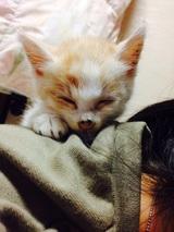 ガリガリの子猫さん 保護猫 鹿児島市