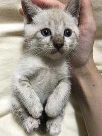 里親募集 保護猫 宮崎市
