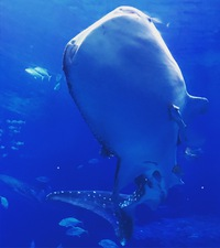 美ら海水族館