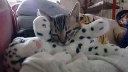 溝の中の子猫さん 保護猫 地域猫活動