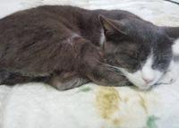 地域猫 保護猫活動 猫の日