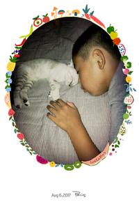 保護猫 地域猫活動