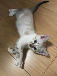 里親募集 保護猫 地域猫