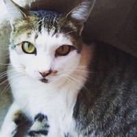 保護猫 野良猫 地域猫