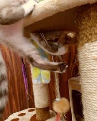 保護猫、地域猫活動