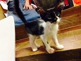 保護猫 里親募集 鹿児島市
