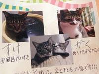 野良猫保護活動