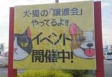 4/2.9 犬猫譲渡会 いぬねこのwa プーラビーダ プラスプラス店