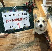 11/24.25.26プーラビーダ霧島店誕生祭