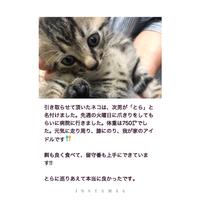 保護猫 地域猫活動 ダブルレインボー