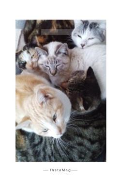 猫団子 野良猫保護活動