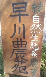 早川農園さん