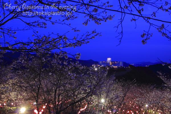 夜の桜まつり