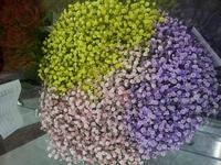 カラフルなカスミ草