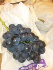種なし葡萄 大分産