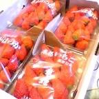苺なきもち…