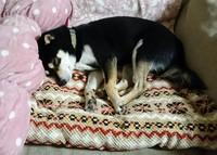 ベッド ♪