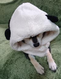 パンダさん ♪