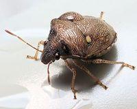 TG-5で昆虫撮影