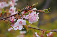 愛宕山の早春の虫