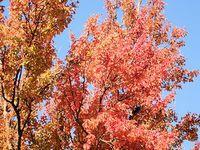 秋の南阿蘇へ